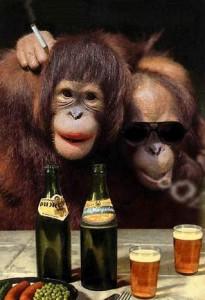 drunkmonkey